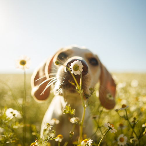 8 Fun Scent Games Your Dog Will Love