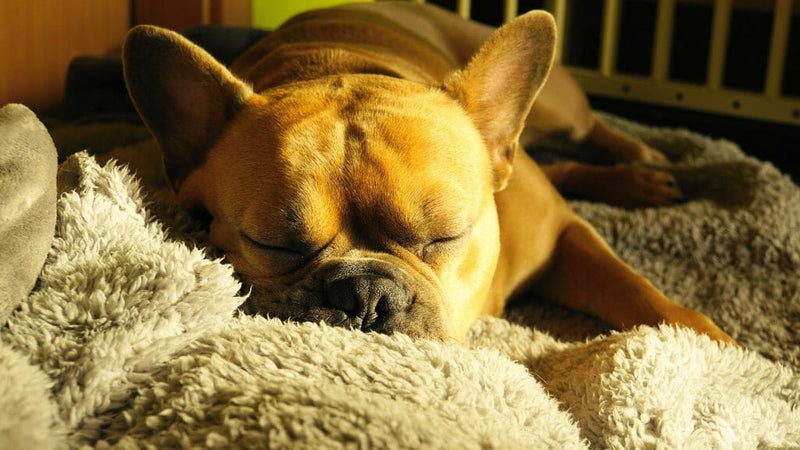 How to Choose a Dog Bed: 12 Different Types and Their Pros and Cons