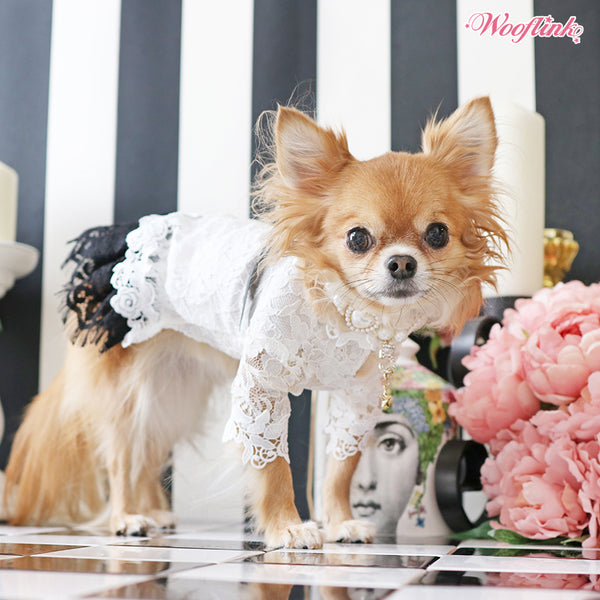 DRESS CLASSY - Bark Fifth Avenue