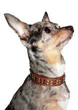Load image into Gallery viewer, Metro Metal Collar - Bark Fifth Avenue