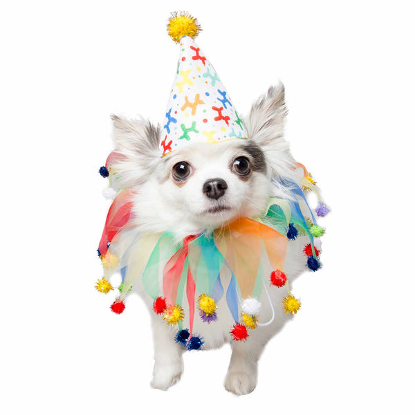 Celebration/Birthday Hat & Collar Set for Dogs - Bark Fifth Avenue