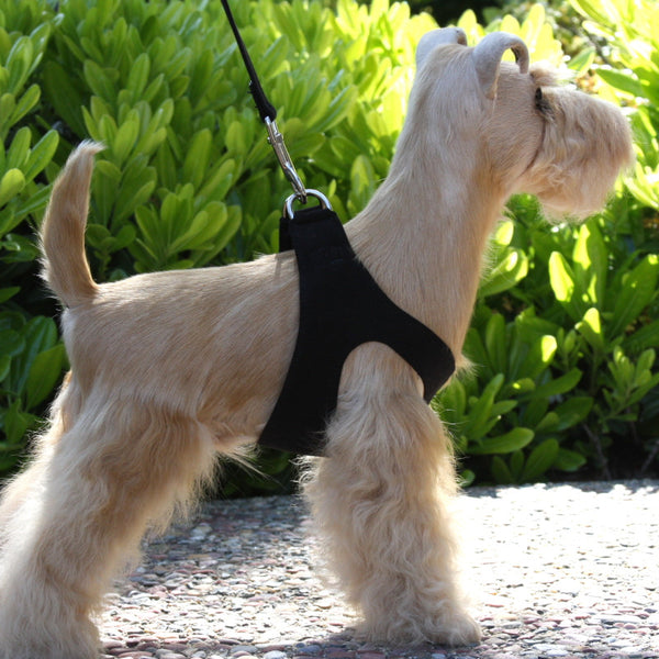Step-In Dog Harnesses by Susan Lanci