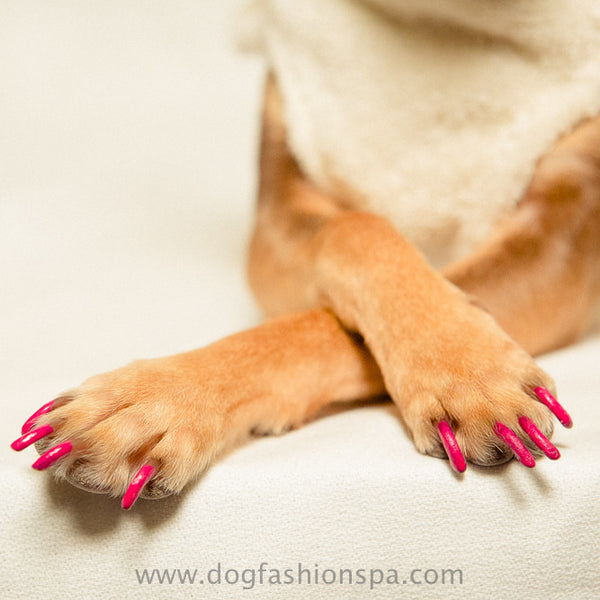 Happy Paw Dog Nail Polish