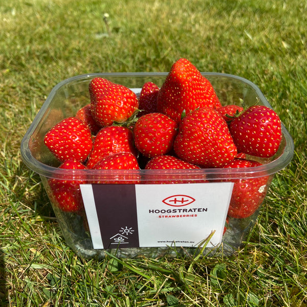New Season Belgian Strawberries