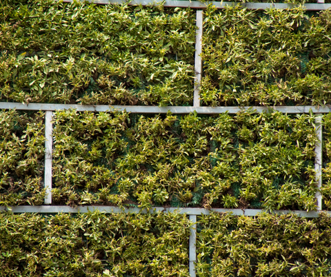 wall with plants growing in it