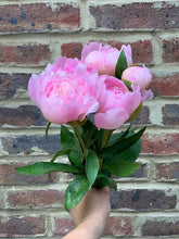 Load image into Gallery viewer, Our Pick Of The Peonies