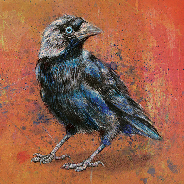 Orange Jackdaw - Square Mounted Giclée Print