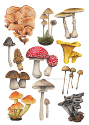 Mushrooms  | A3 Giclée Print by Carol Farrell