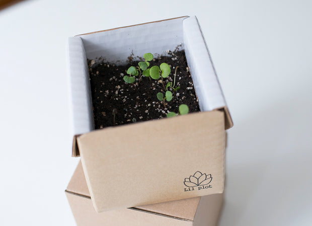 Grow Your Own Christmas Tree Kit