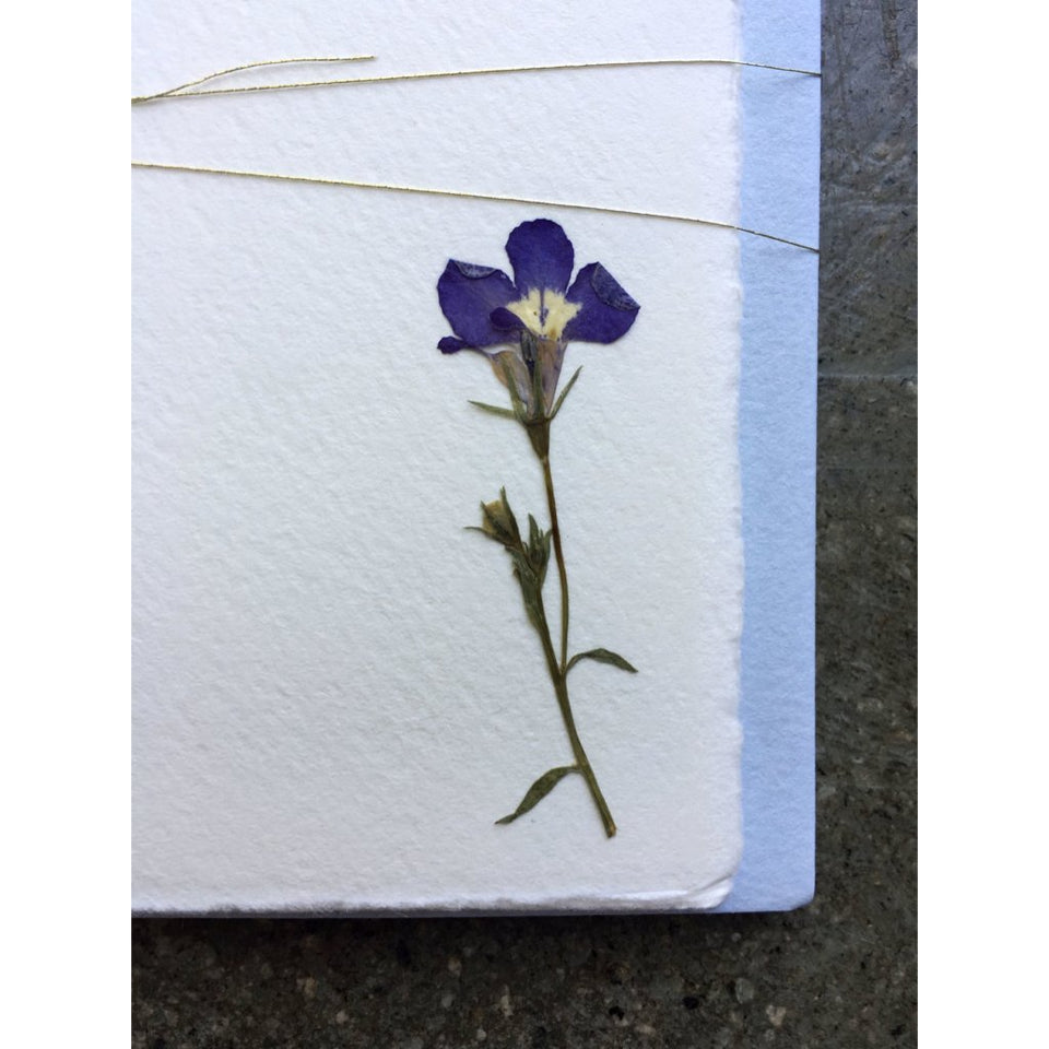 Pressed Flower Notes - Love in a Mist, Pale Blue Envelope