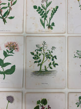Load image into Gallery viewer, Mini Botanical Print