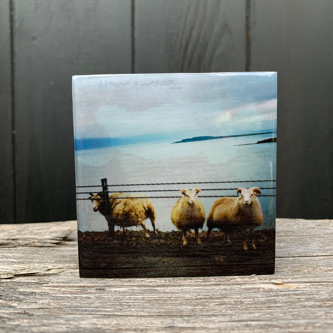 sheep, iceland... mini resin on wood