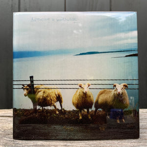 sheep, iceland... resin on wood