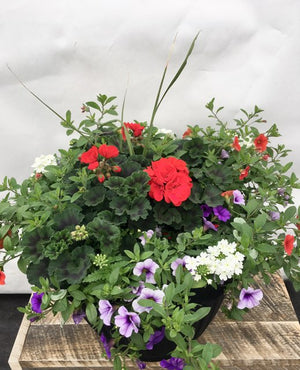 Geranium Mix Planter 15.5""