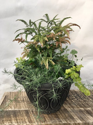 Specialty Fern with Begonia Planter 13""