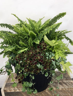 Mix Greenery with Fern Planter 15.5""