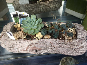 Log Succulent Planter