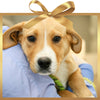 Treatment for one sick or injured pet