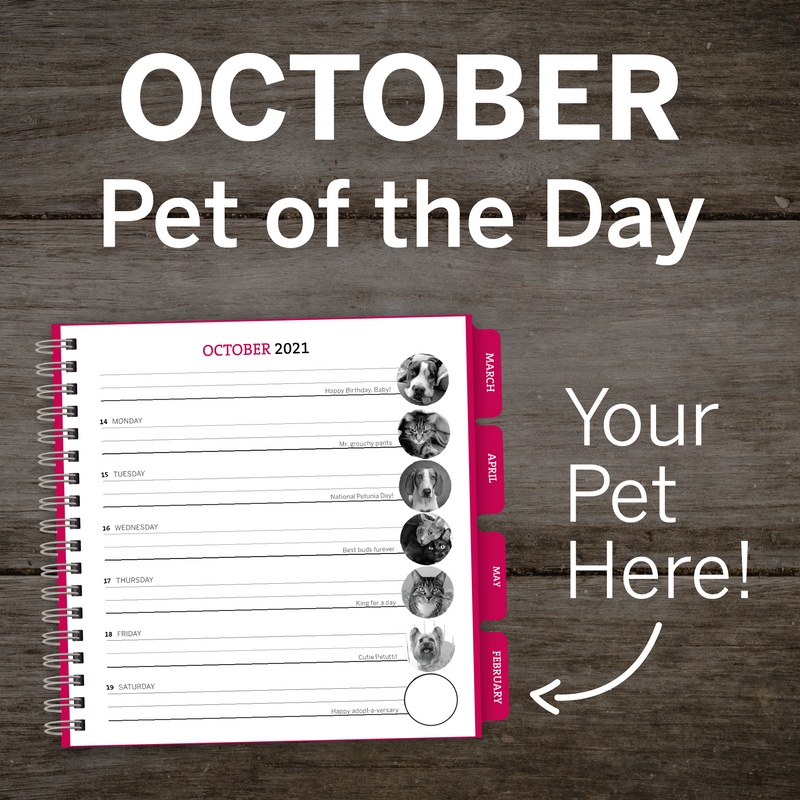 OCTOBER Pet of the Day – PAWS Chicago Desktop Calendar 2021