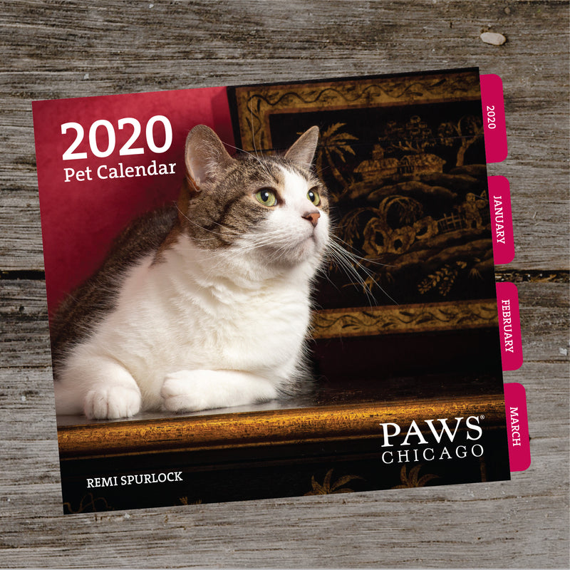 FEBRUARY Pet of the Day – PAWS Chicago Desktop Calendar 2021