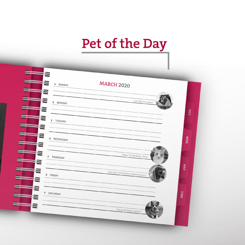 JUNE Pet of the Day – PAWS Chicago Desktop Calendar 2021
