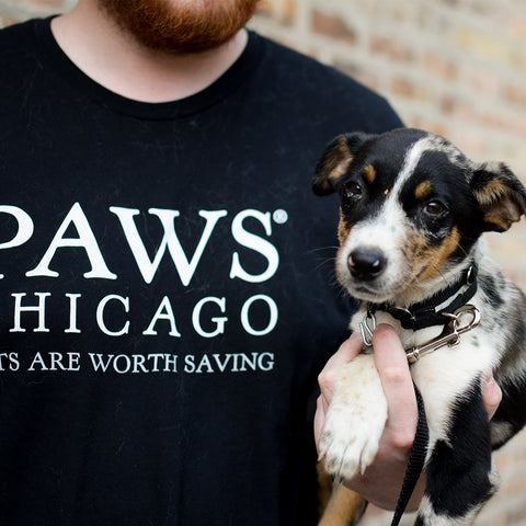 PAWS Chicago Black Face Mask