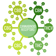 Other Cannabinoids in the hemp plant are proving to be very beneficial | Oregon Grassroot