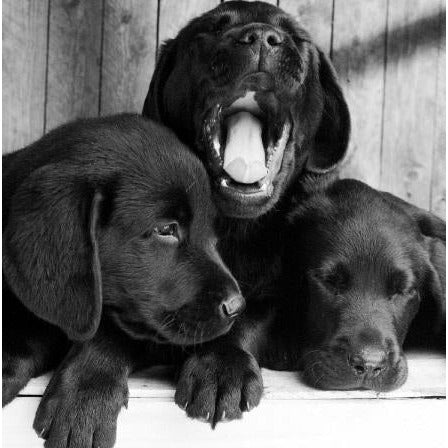 In Black & White, Yawning, Open, Greetings Card