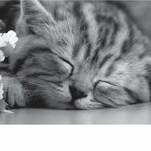 Load image into Gallery viewer, In Black & White, Sleeping Kit, Open, Greetings Card