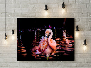 Flamingo Tropical Photo Print