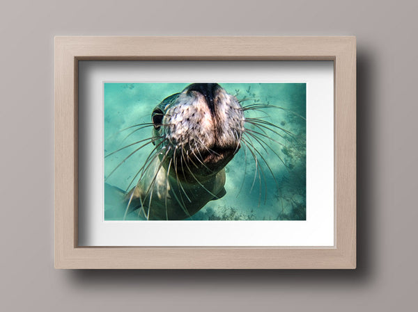 Sea Lion Photo Print