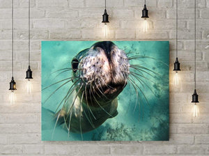 Sea Lion Photography