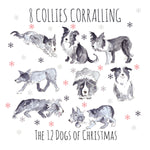 8 Collies Corralling - Greeting Card