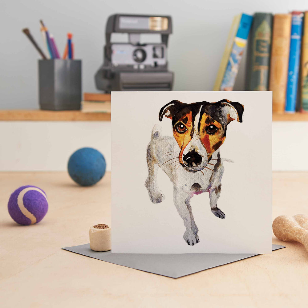 Jack Russell Terrier - Greeting Card