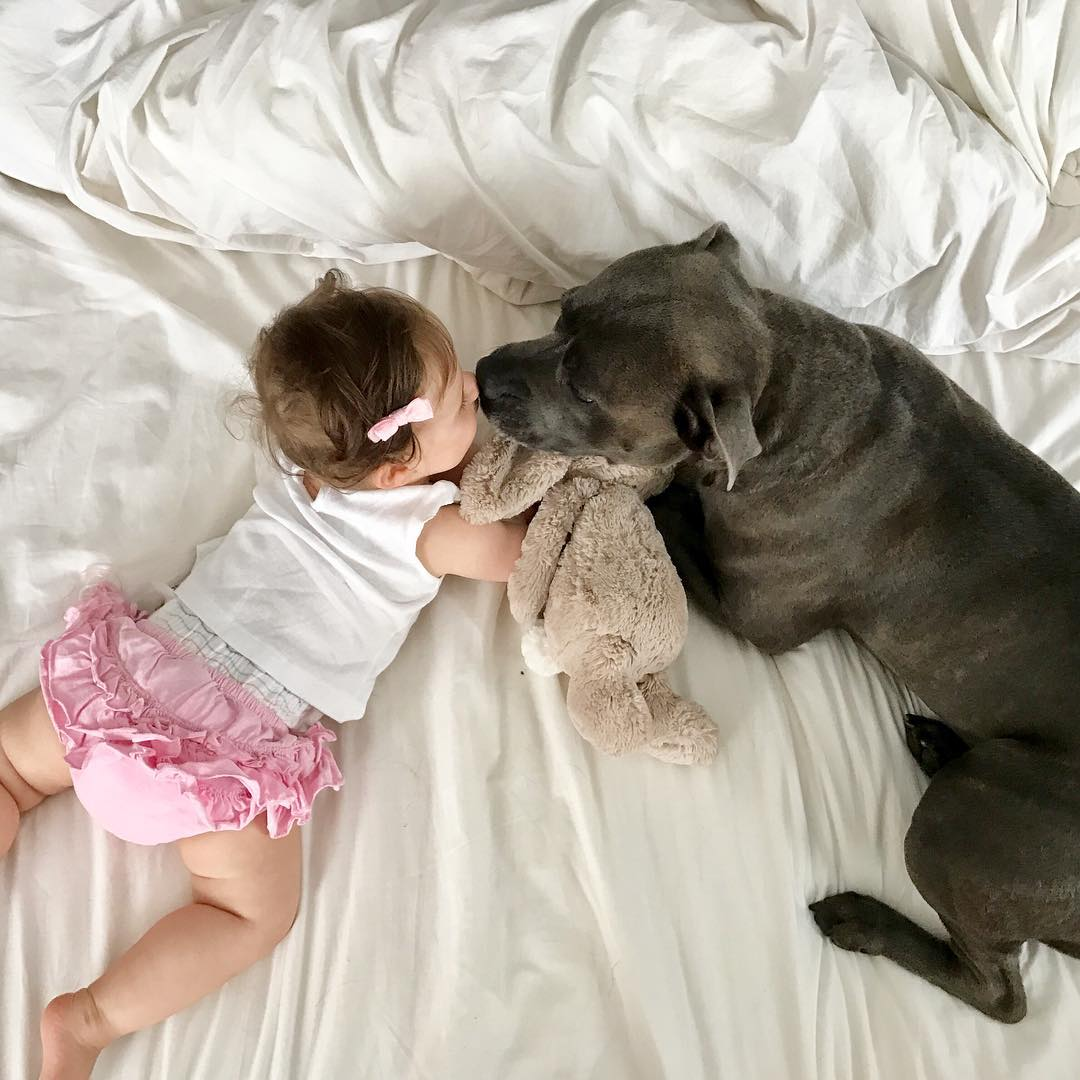Dog and Baby Kiss | Photo via Instagram @bullyandthebabe | Baby Aspen