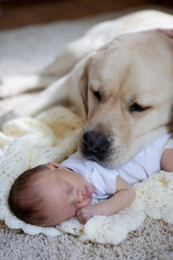 Dog Protecting Baby as He Sleeps | Amie Fedora Photography via Frosted Petticoat Blog | Baby Aspen