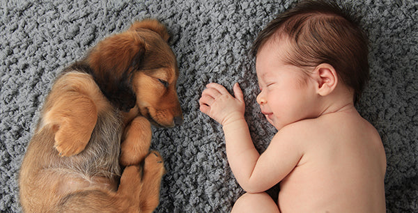 Newboarn Baby and Dachshund | Dog and Baby Napping Buddies | Baby Aspen