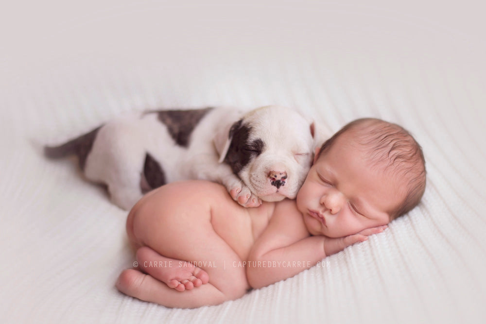 Newborn Baby & Puppy | Capture by Carrie Photography | Baby Aspen