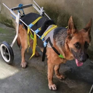 Dog Mobility Back Legs Wheelchair