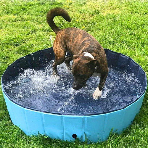 Heavy Duty Large Plastic Dog Swimming Pool | Zincera