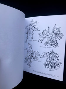 Buds Along the Path Coloring Book