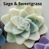 Succulent Shea Magic Soaps