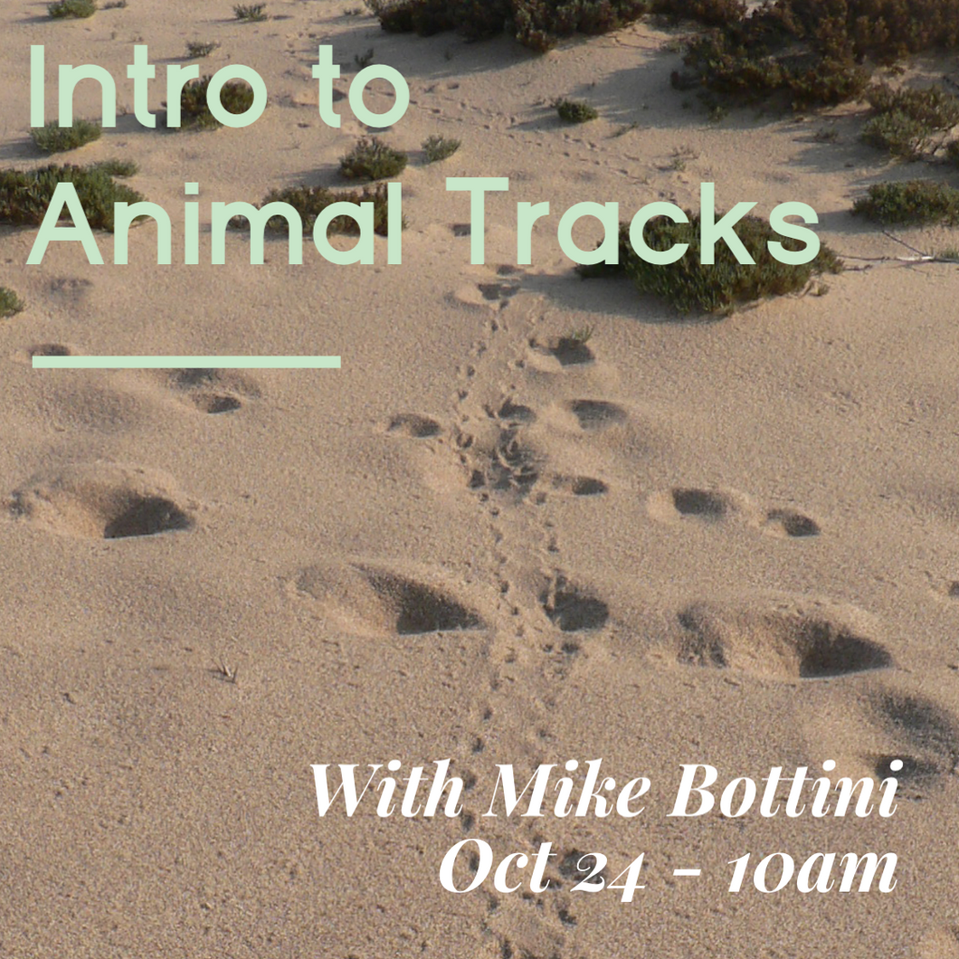 Intro to Animal Tracks Excursion With Mike Bottini - Oct 24