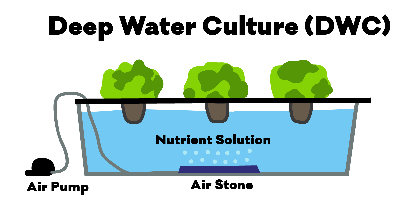 Diagram of the hydroponic Deep Water Culture (DWC) Method