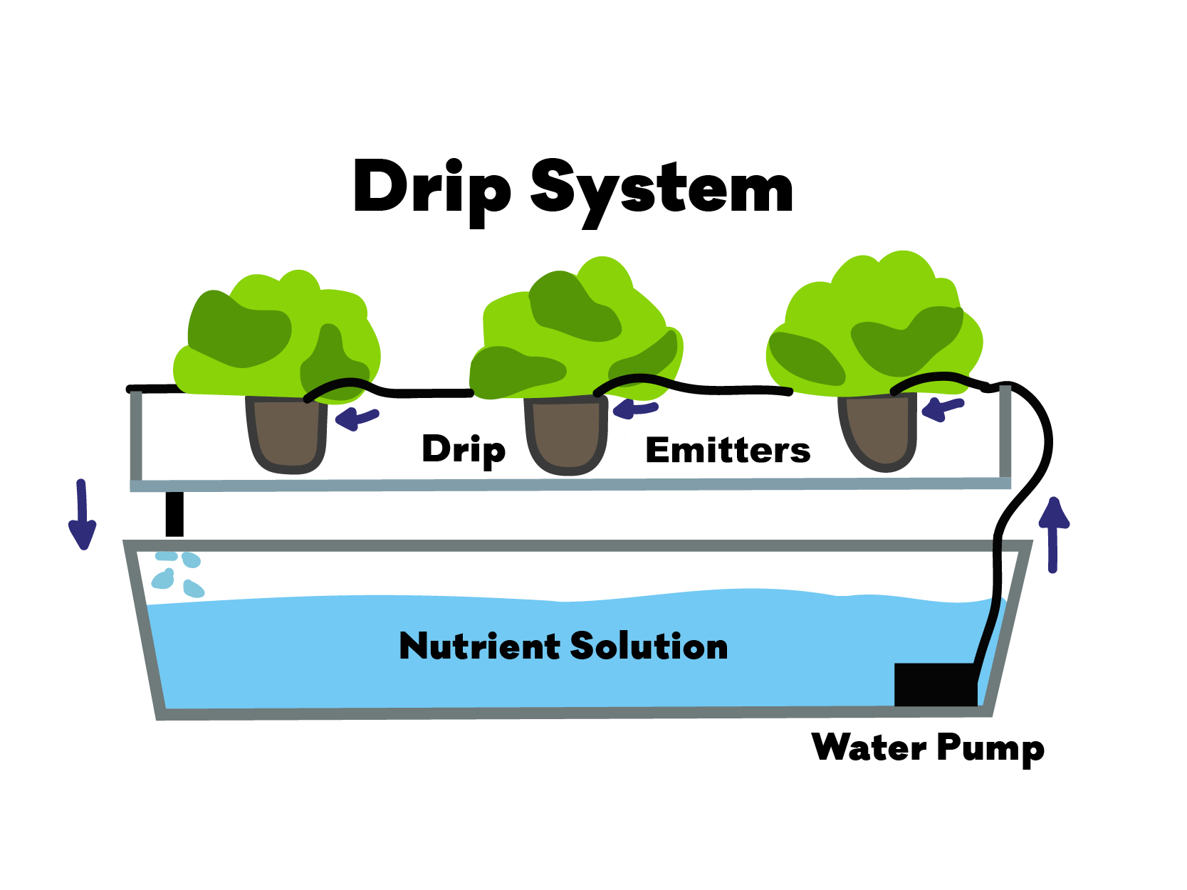 Diagram of hydroponics Drip System