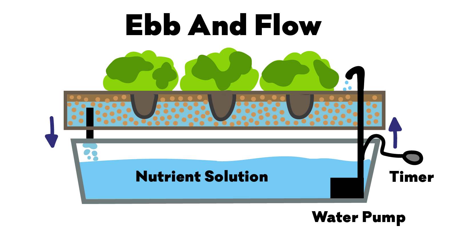 Diagram of the hydroponic Ebb and Flow System / Method