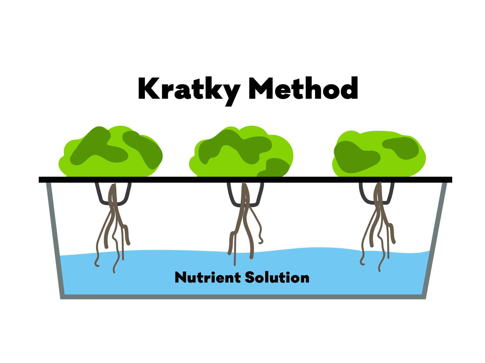 Diagram of the hydroponic Kratky Method / Kratky System