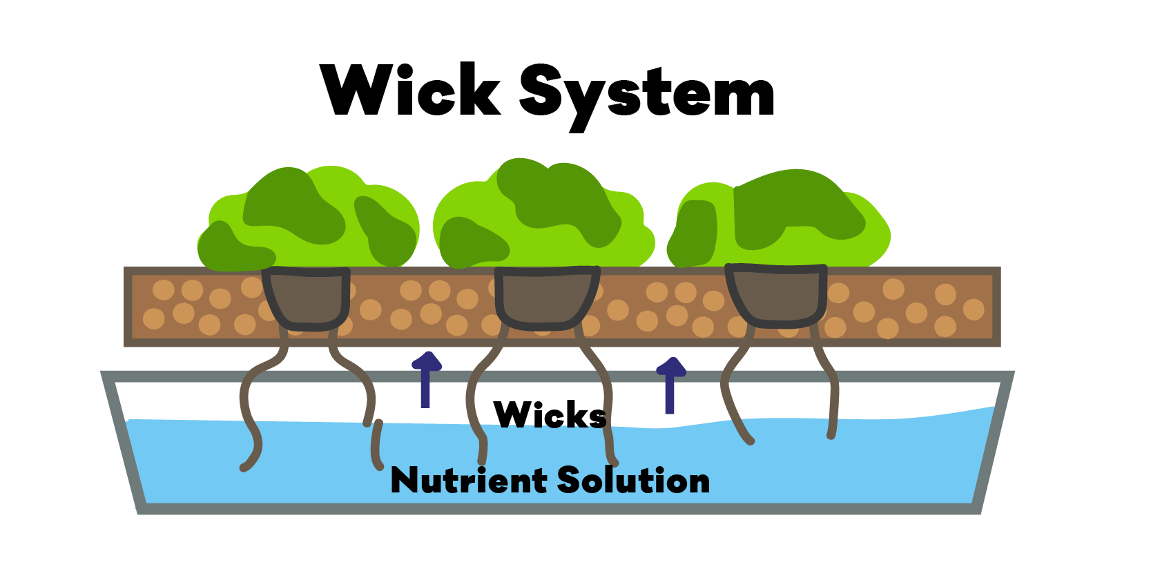 Diagram of the the Hydroponic Wick Method / Wick System