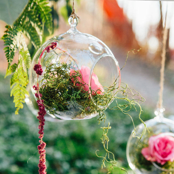 Large Hanging Glass Terrarium Rental