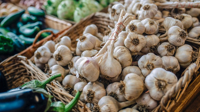 AGED GARLIC LOWERS BLOOD PRESSURE & CHOLESTEROL, INCREASES BENEFICIAL GUT BACTERIA